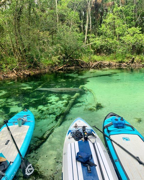 5 Best Locations to Spot Manatees on Your Inflatable Paddleboard